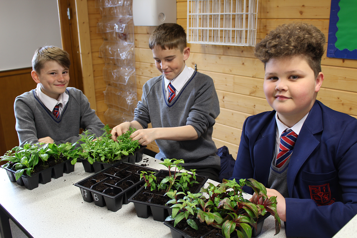 Yr 7 Urmston in Bloom planting 1 crop.png