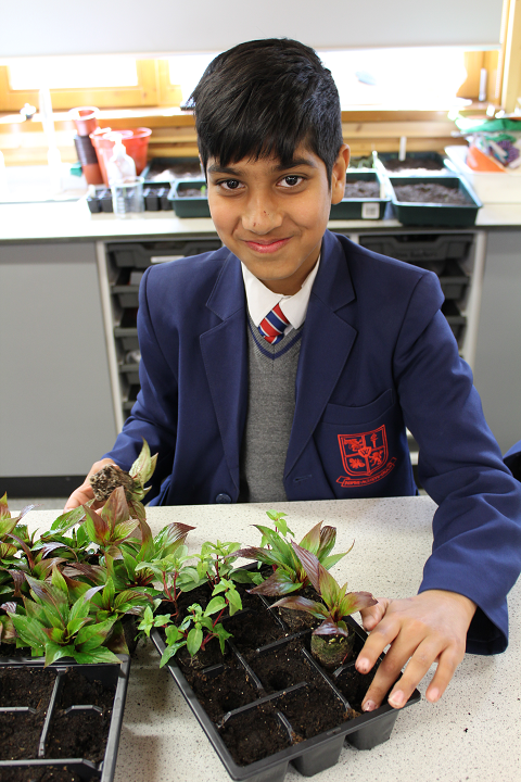 Yr 7 Urmston in Bloom planting 3 crop.png