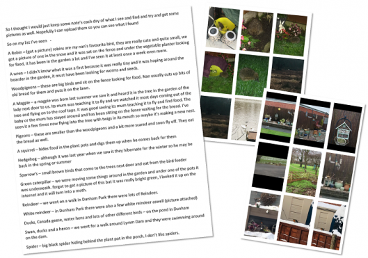 Yr 8 Alfie D Wildlife Watching Personal Project crop.png